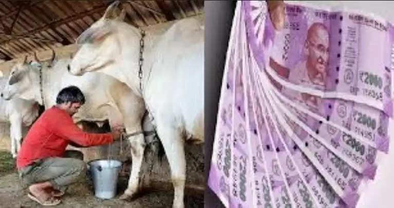 Dairy Loan Subsidy Scheme : सरकार ने डेयरी ऋण पर शुरू की अनुदान योजना