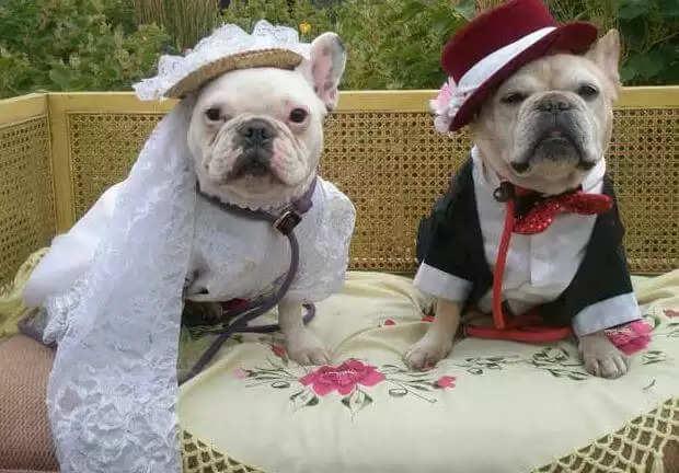 Dog Marriage Video :पूरी रस्मों और धूमधाम के साथ हुई कुत्ते की शादी, देखिये ये वीडियो