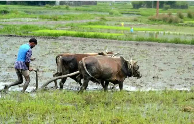 PM Kisan Samman Yojana: किसानों को सालाना मिलेंगे 6,000 के बजाय 36,000 रुपये, केवल करना होगा ये काम